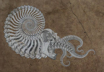 chambered bonetilus by ragingcephalopod