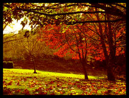 Autumn or Fall 2 by lost-in-burnie