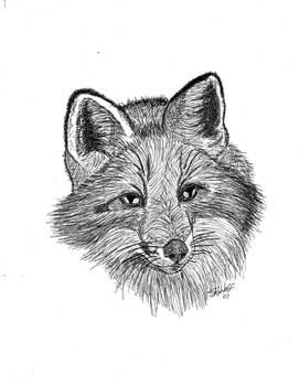 Foxie Frenzy