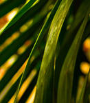 Palm Leaves by MCPhotographyNYC