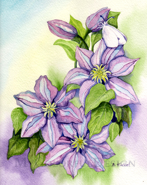 Clematis by Dusty-Feather
