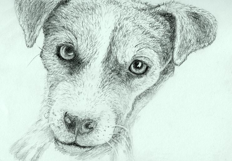 Dog's Head by Alina-Kurbiel