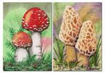 ACEO Mushrooms by Alina-Kurbiel