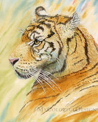 Tiger in Grassland by Alina-Kurbiel
