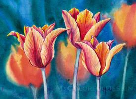 Fiery Tulips by Alina-Kurbiel