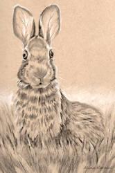 Big Ears by Alina-Kurbiel