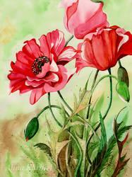Blooming Summer by Alina-Kurbiel
