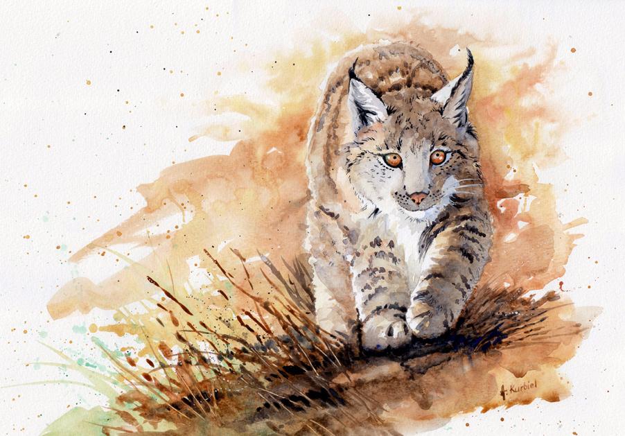 Lynx by Alina-Kurbiel