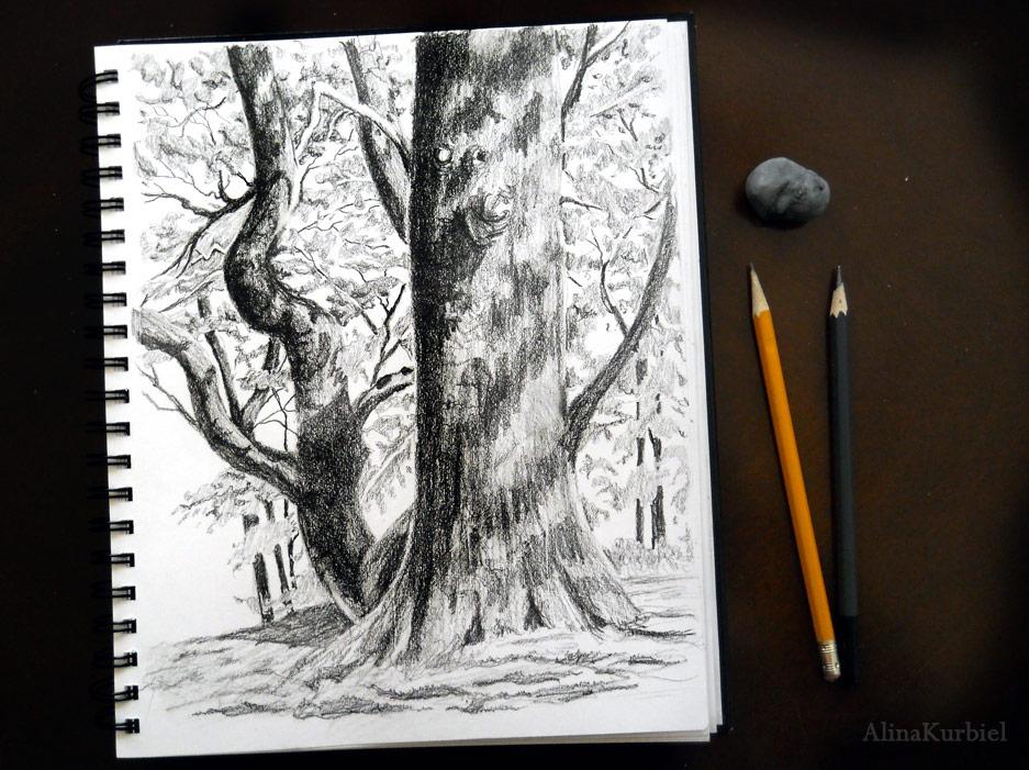 Tree Sketch by Alina-Kurbiel