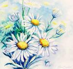 Daisies Flowers Bouquet