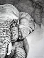 Elephant by Alina-Kurbiel