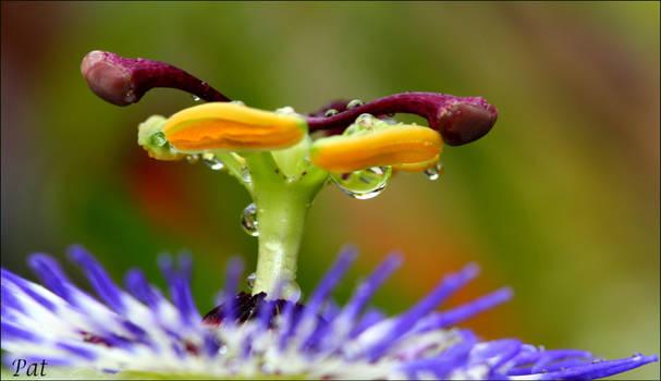 Few drops of rain