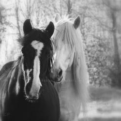 Rencontre en noir et blanc