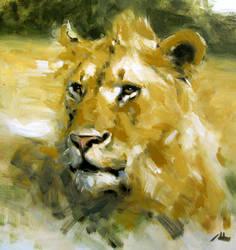 lion in honest strokes
