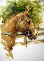 horse by alrasyid