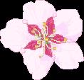 apple flower by piikan