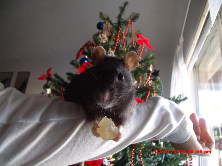 Christmas Marci by MiruruLove