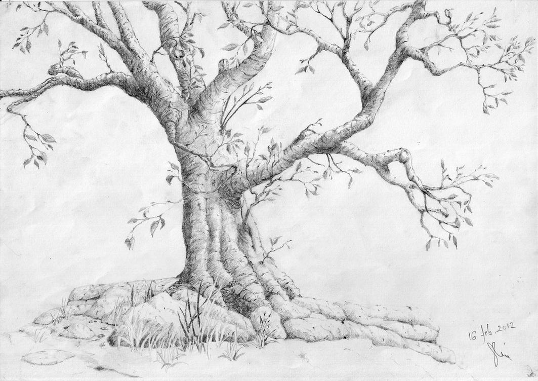 Tree feb 2012 by kathia909 Tree Pencil Drawing