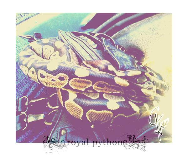 Royal Python by HellaHavoc