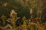 Autumn Vegetation