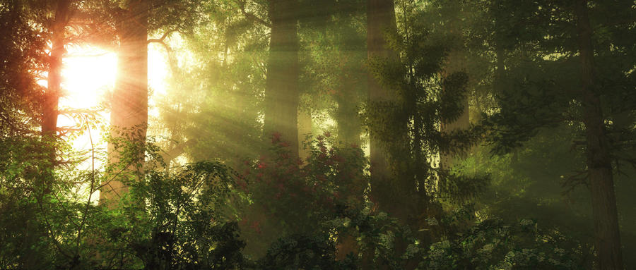 Morning Glory in the Woods by pdeck