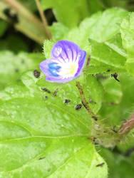Tiny Purple Flower by AmyKittenFox