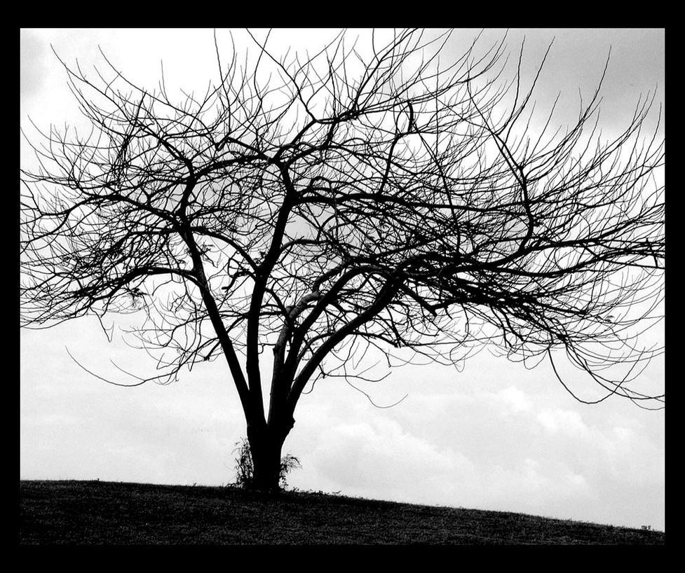 Tree By Depressed Barbie