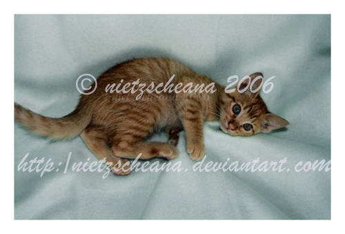 Tiger Baby by nietzscheana