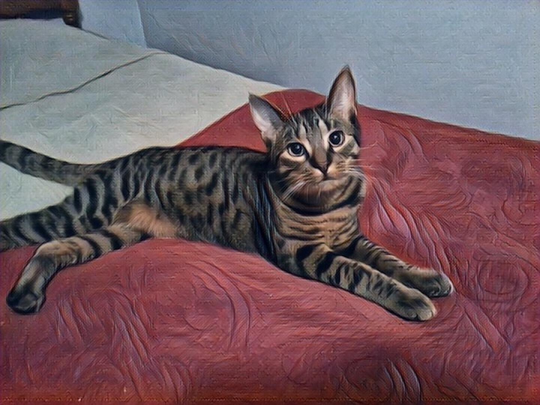 Kittenish Bailey by Darkendrama