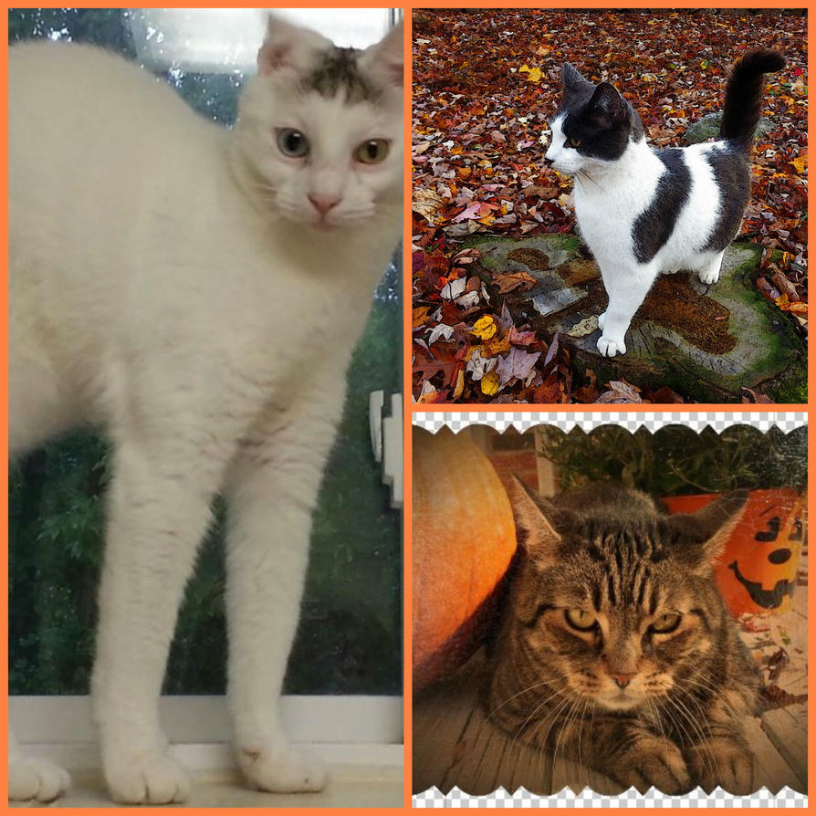Halloween Cat Collage by Darkendrama