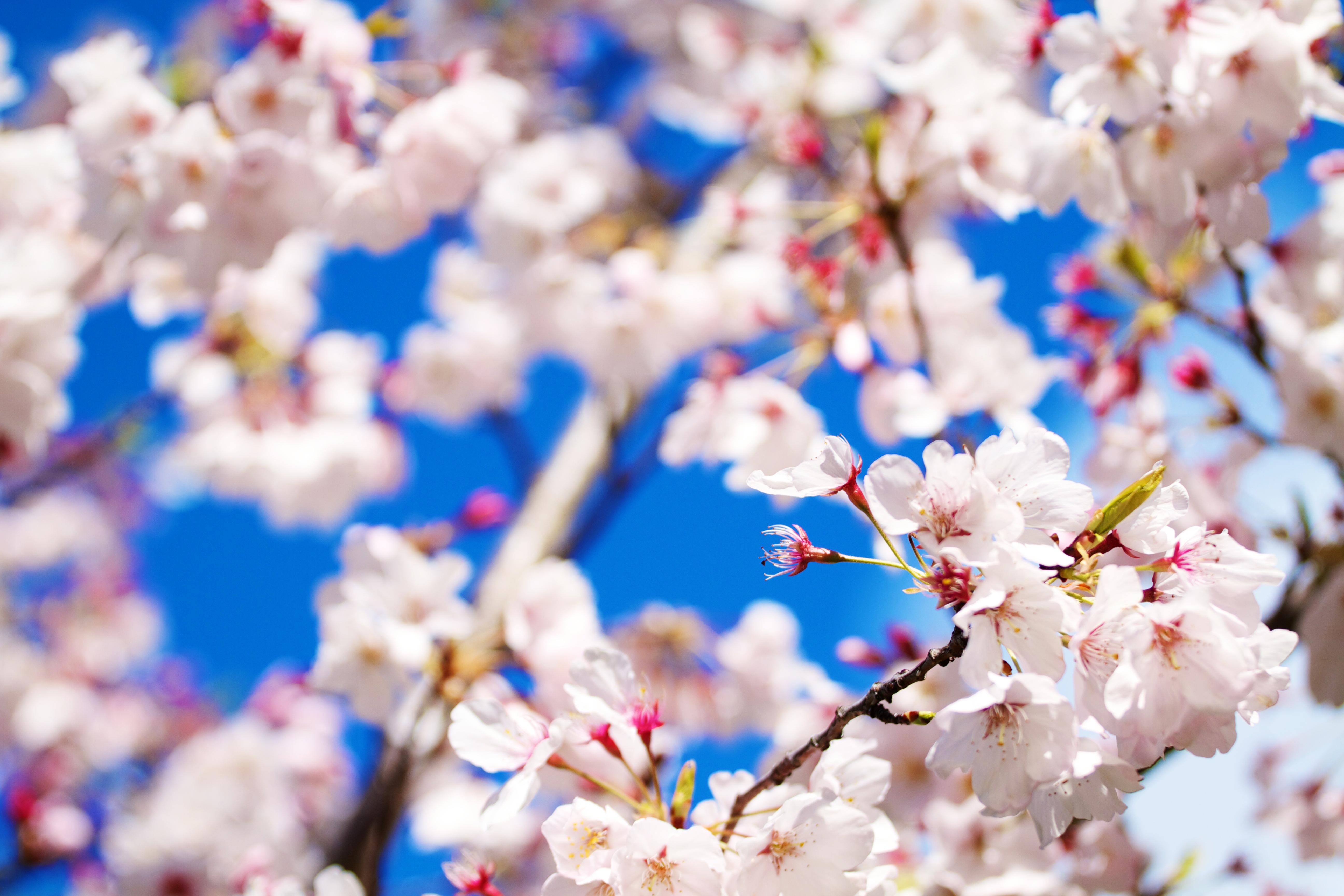 Pretty Flowers Tumblr Dress Images