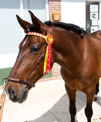 Stock Horse 15