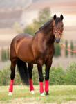 Stock Horse 17