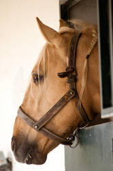 Stock Horse 19