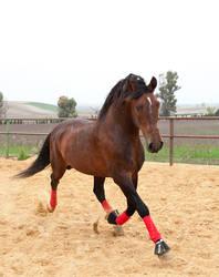 Stock Horse 20