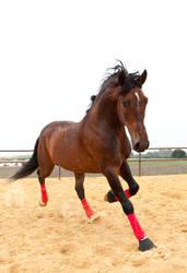 Stock Horse 21
