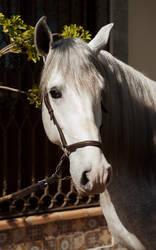 Stock Horse 23