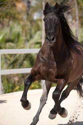 Stock Horse 24