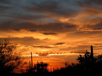 Sonoran Sunset Delight by ARIZONA-Art-History
