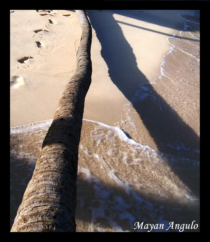 Coconut Tree with Footprints by Mayanita