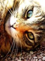 Cat's eye by bellatrix18