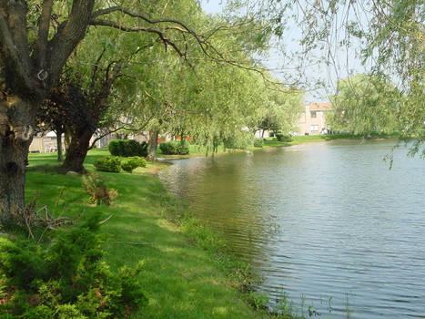 The Hidden Pond 1