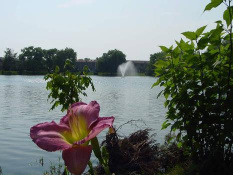 The Hidden Pond 4