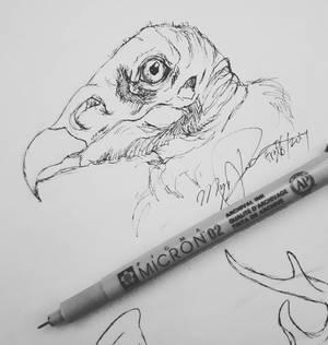 Vulture Sketch