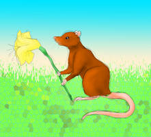 Rat with flower