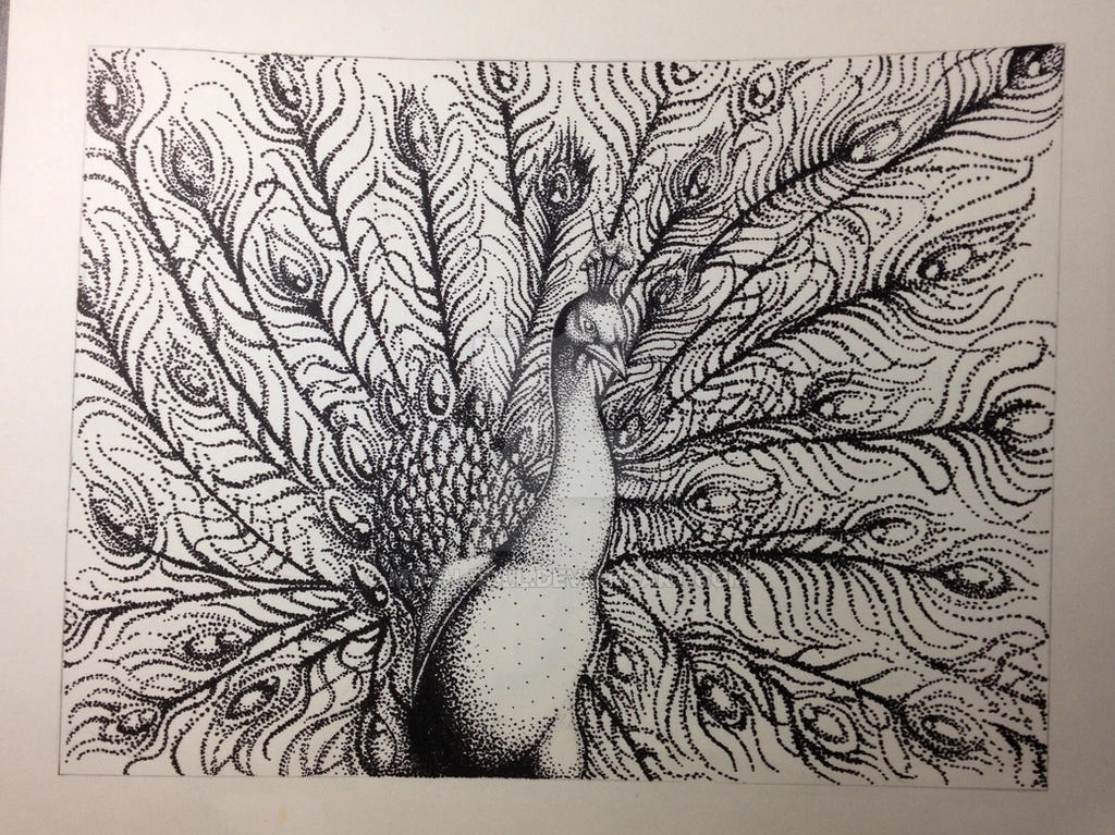 Ink Drawing Pointillism Peacock By Moth Doll On Deviantart