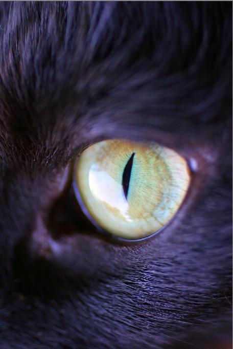cats eye 1 by msfluffykins