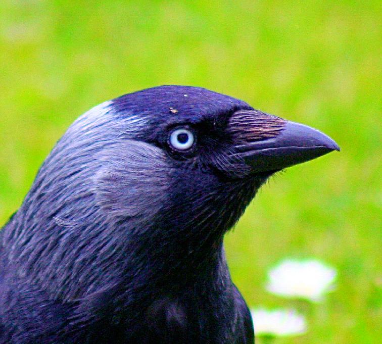 bird by msfluffykins