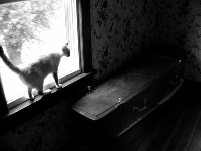 the cat and the casket by stripeymess