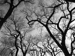 tingely trees by stripeymess